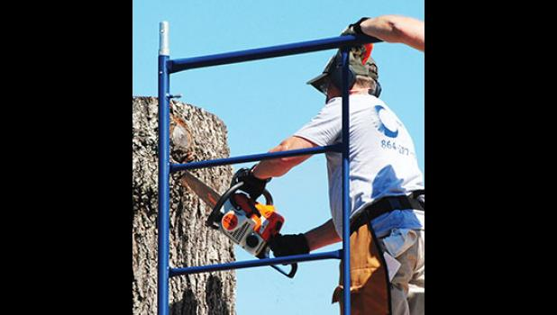 Edwin Hutchinson made the first cut last Thursday, July 23, on the 15-foot tree at the Center for the Arts.