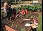 A video of the School Garden project can be viewed on the school Facebook page.